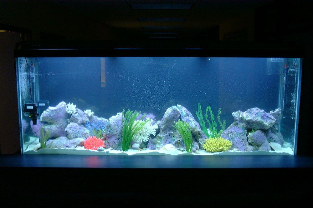 Fish tank maintenance service rocks 2017 fish tank for Fish tank rock cleaner